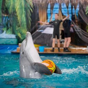 Дельфинарии, океанариумы Русского