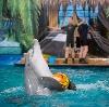 Дельфинарии, океанариумы в Русском